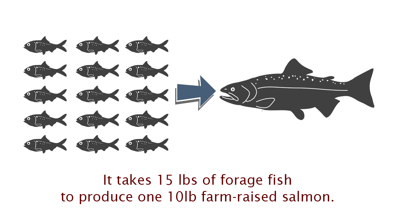 Forage fish kepley biosystems inc for Farm raised fish
