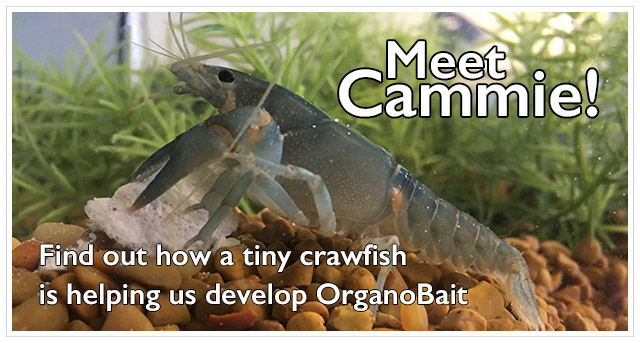 Meet Cammie! The Lab Crawfish