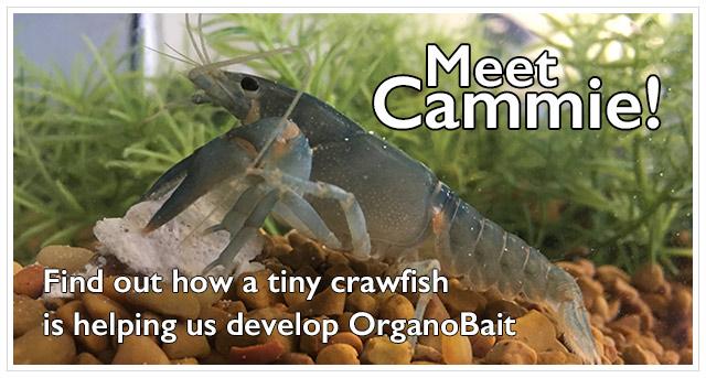 Meet Cammie! The Lab Crawfish