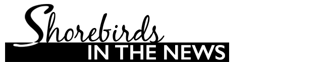 Shorebirds in the news