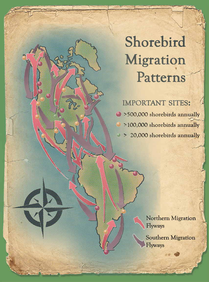 North and South American Shorebird Migration Flyways