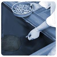 Horesehoe Crab Publication Nutrition